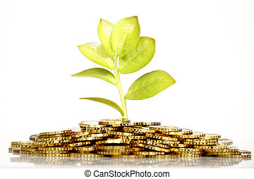 Money growing - Growing green fresh leaf from gold coins