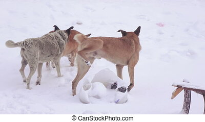 Stray dogs in snow - As snow near dump runs flock of stray...