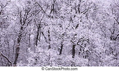 Snowy winter on the forest