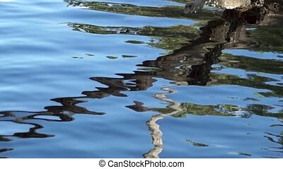 Hypnotic branch reflected in water - A dead tree is sticking...
