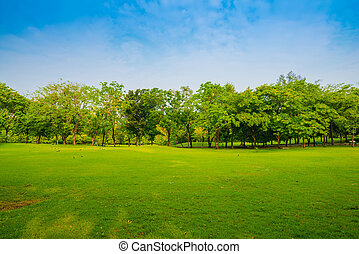 Beautiful green park and meadow, Central Park