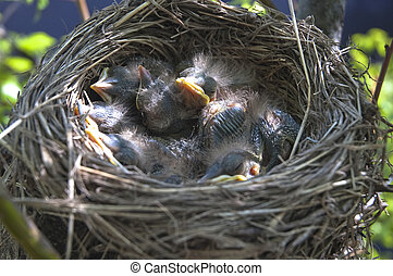 Little children Birds 2 - the Chicks in the nest, top view