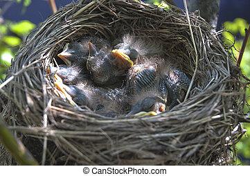 kevés,  2, gyerekek, madarak