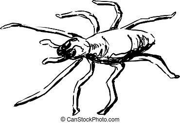 Yellow Sac Spider Outline - Top down view of outlined single...