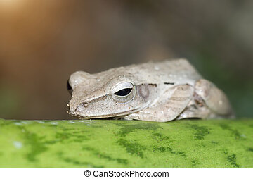 grey frog sleeping on green leaf