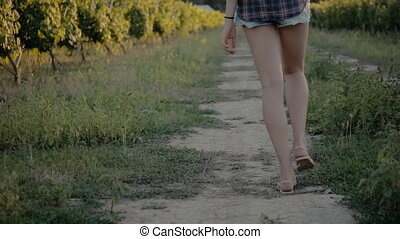Girl in shorts and shirt walking on the vineyards -...