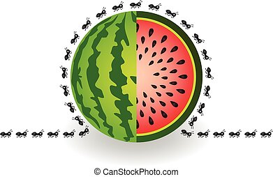 Ants around watermelon - Scalable vectorial image...
