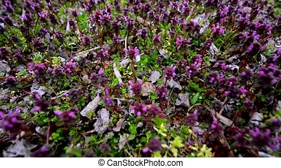 Small purple flowers blown by the wind outdoor footage