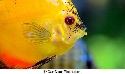Exotic fish in aquarium swimming around on the bottom