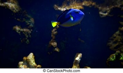 Exotic fish in aquarium swimming around on the bottom