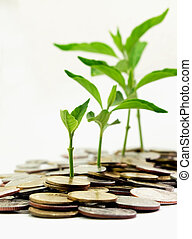 plant growth on the money - business conception,plant growth...