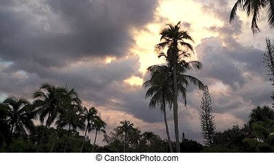 slow pan of tropical scene - A slow pan down of a tropical...