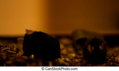 Mice in the dark - Fat mice in the dark closeup footage...