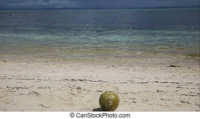 Coconut falls into the water. - Coconut falls from a tree...