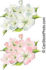 Blossoming branch of apple tree