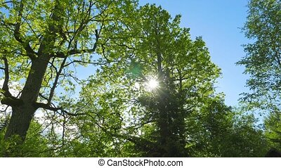 Green Oaks and spring sun, tilt