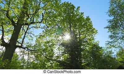 Green Oaks and spring sun, tilt