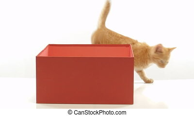 Little funny kittens playing in a cardboard box