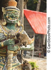 Monkeys in the Buddhist temple meet visitors and...