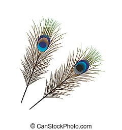 Vector isolated peacock feather - Two vector isolated...