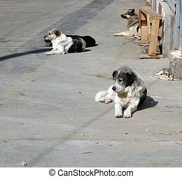 stray dogs on street at day