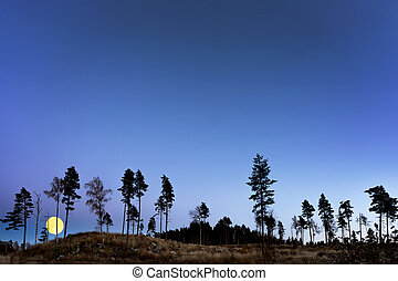 trees at night with full moon - Silhouettes of trees at...