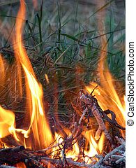 Burning dry twigs after pruning apple tree