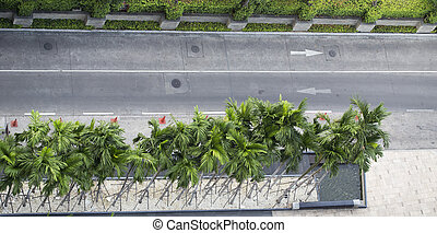 Empty road with palm tree, Top view landscape
