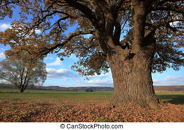Old oak tree in golden autumn