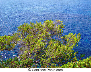 Crown of pine hangs over the sea - Crown of pine tree hangs...
