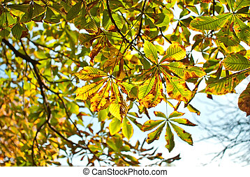 autumn colored leaves on the tree as a background