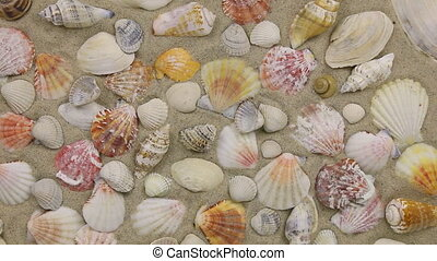 Approximation of sea shells lying on the sand, top view Zoom...