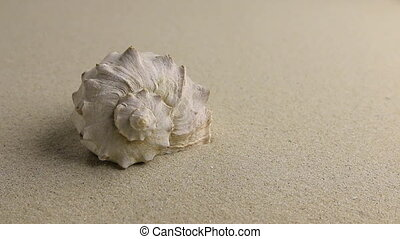 Approximation of sea shell lying on the sand, top view Zoom...