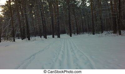 Ski track on snow in winter mixed forest