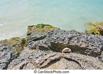 Rock with green slimy seagrass - Clear turquoise...