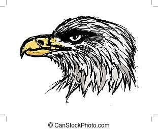 bold eagle, illustration of wildlife, bird, zoo, symbol of USA