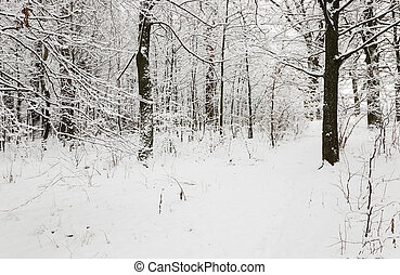 winter road snow - a small country road passes in a field in...