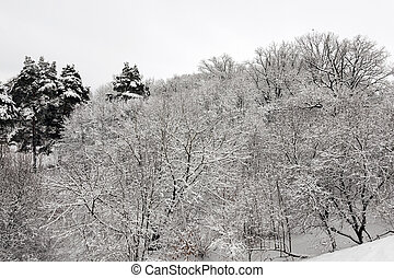 Winter Park with snow. - trees in the park in winter. the...
