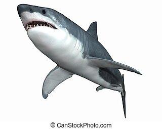 Great White Shark - 3D Render of an Great White Shark