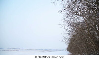 Snow-covered field and trees in winter