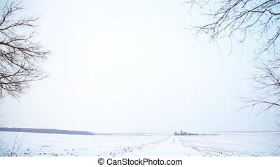 Snow-covered field and trees in winter - Large field with...