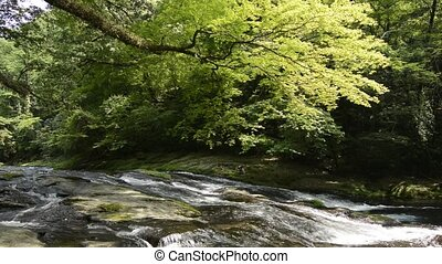 River flowing rock mass under painted maple tree in front of...