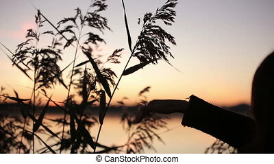 Young Pretty Brunette Playing with Grass Watching Sunrise over the Lake