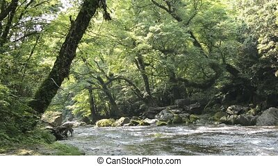 River and large forest - River flowing over a rock between...