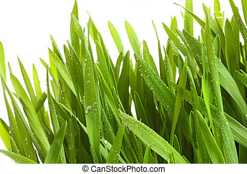 Wheat-grass against a white background