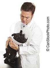 Vet Calms Nervous Patient - Veterinarian calming down a...