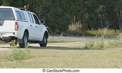 Kangaroos crossing dirt road - pan shot