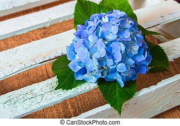 fresh blue hydrangea flower on wooden boards