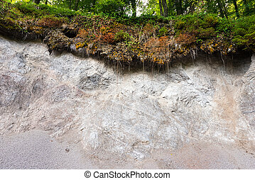 Erosion in the Forest - Detail of a landslide in the forest...