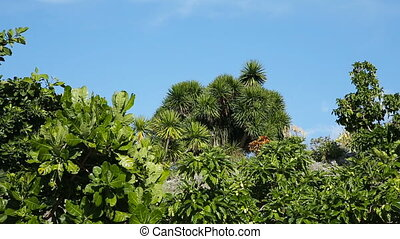 Landscape of tropical plant under blue sky - jungle of...